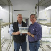 Justin Gilpin, Kansas Wheat CEO, and Forrest Chumley, former Heartland Plant Innovations President, showcase some of the first doubled haploid plants at the KWIC.
