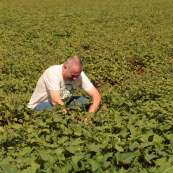 Photo: Doug Keesling inspects a field of sweet potatoes southwest of Havana, Cuba.