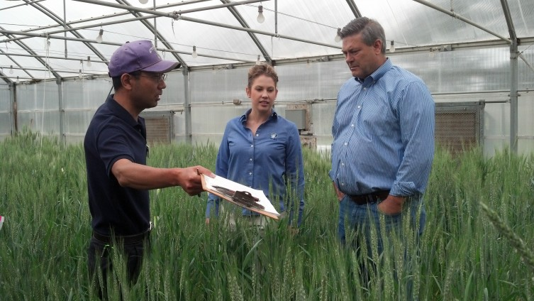 Dr. Guorong Zhang, Tess Brensing and Dave Green tour the hard white wheat greenhouse at K-State Ag Research Center in Hays.
