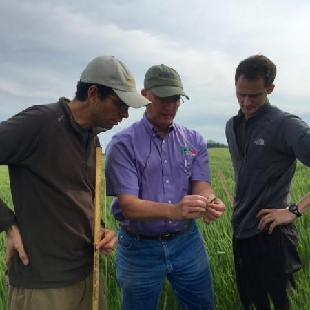 wheat, Kansas Wheat, Wheat Quality Tour