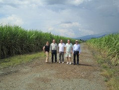 Colombia does not grow much wheat, so the team instead checked out a local sugarcane field.