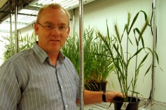 With funding by Kansas wheat farmers, Dr. Harold Trick is a nationally recognized expert at transforming wheat varieties.