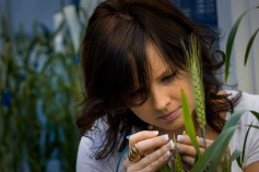 Photo: Erin Mark, Research Associate, Heartland Plant Innovations.