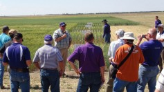 Photo: Allan Fritz, KSU wheat breeder in Manhattan, Kansas.