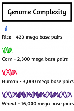 Image: Genome Complexity Infographic.