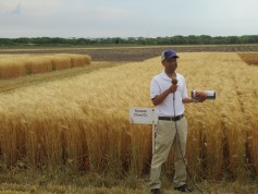 Dr. Guorong Zhang leads a wheat variety tour in Hays, Kansas.