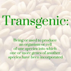 Transgenic: being or used to produce an organism or cell of one species into which one or more genes of another species have been incorporated.