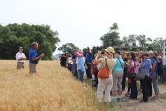 Photo: Wheat Safari 2014.