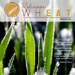wheat, Kansas Wheat