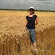 Heidi Mcindoo wheat, Kansas Wheat