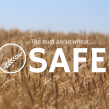 wheat, Kansas Wheat, real reason why wheat is toxic, toxic wheat, is wheat safe, rediscover wheat