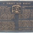 wheat, Kansas Wheat, Turkey Red wheat, heritage wheat